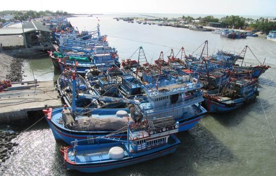 Tàu thuyền đánh bắt xa bờ neo đậu tại cảng cá Ninh Chữ (huyện Ninh Hải, Ninh Thuận). (Ảnh: Nguyễn Thành/TTXVN)