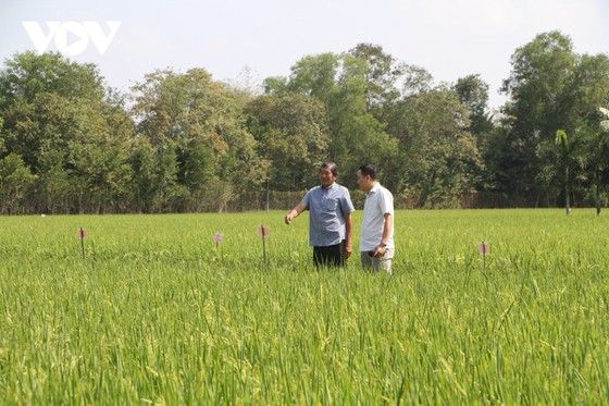 """Nhiều ý kiến trái chiều về việc chọn gạo ST25 đi thi """"World's Best Rice 2020"""" ảnh 2"""