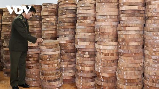 Lỗ hổng pháp lý truy xuất nguồn gốc lâm sản: Gỗ luồn rừng về xuôi? ảnh 2