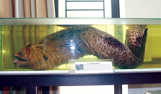 Bảo tàng sinh vật biển trên đảo ảnh 1