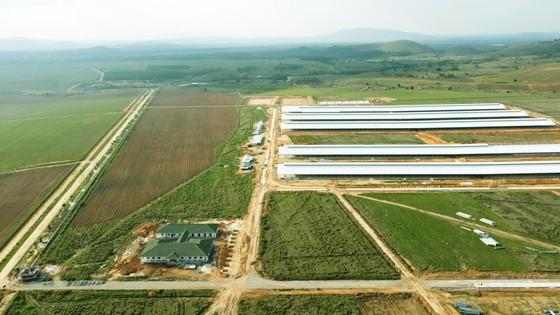 Siêu dự án trang trại của Vinamilk tại Lào sẽ 'cho sữa' vào đầu năm 2022 ảnh 1