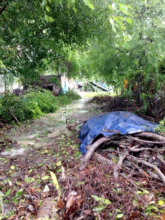 Tan hoang sau bão số 12 ảnh 4