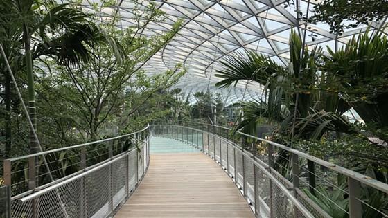 Jewel Changi: Kỳ quan sân bay mới tại Singapore ảnh 2