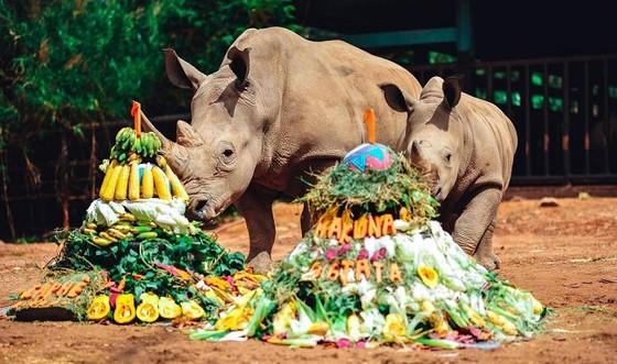Vinpearl Safari chào đón tê giác thứ 3 chào đời ảnh 3
