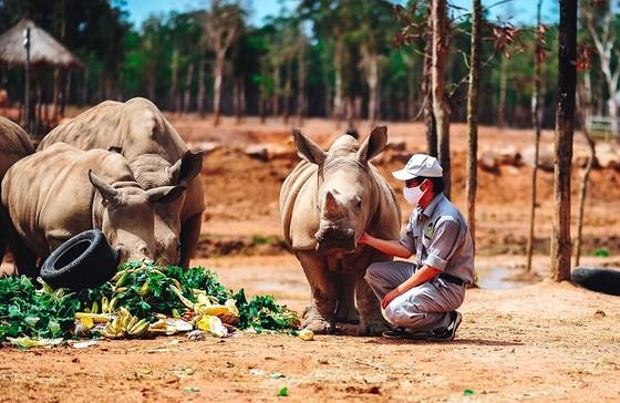Vinpearl Safari chào đón tê giác thứ 3 chào đời ảnh 4