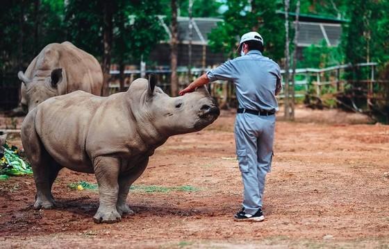 Vinpearl Safari chào đón tê giác thứ 3 chào đời ảnh 7