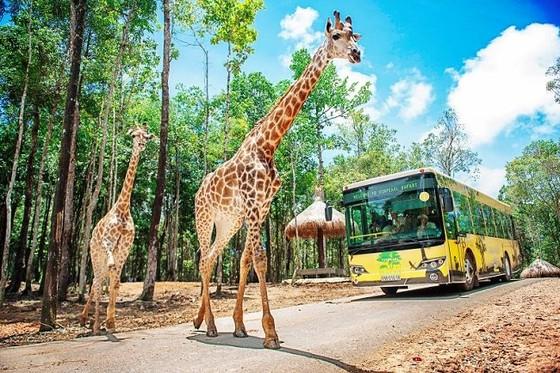 Vinpearl Safari chào đón tê giác thứ 3 chào đời ảnh 9