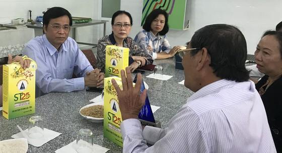 Ông Hồ Quang Cua đã thuê luật sư đăng ký bảo hộ gạo ST25 ảnh 1