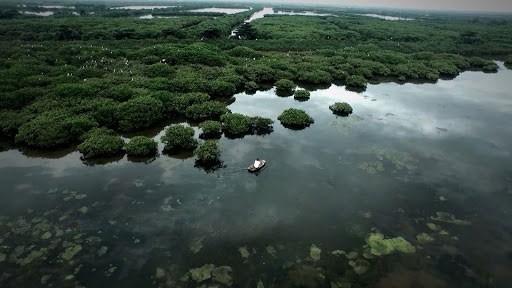 Công bố thành lập Khu bảo tồn thiên nhiên Thái Thụy, tỉnh Thái Bình ảnh 1