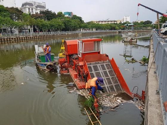 Cá chết hàng loạt trên kênh Nhiêu Lộc – Thị Nghè ảnh 5