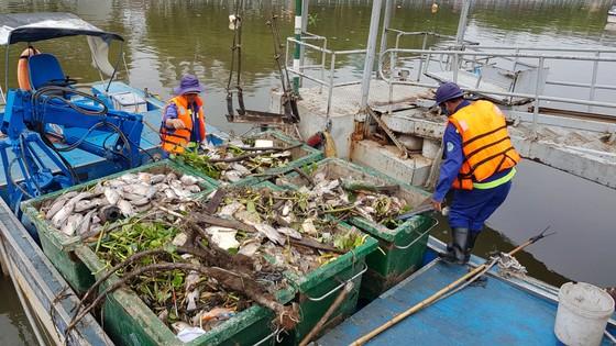 Cá chết hàng loạt trên kênh Nhiêu Lộc – Thị Nghè ảnh 3