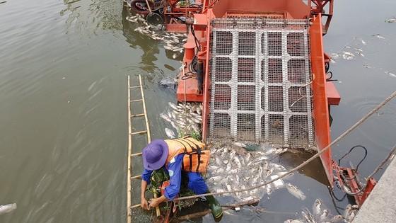 Cá chết hàng loạt trên kênh Nhiêu Lộc – Thị Nghè ảnh 2