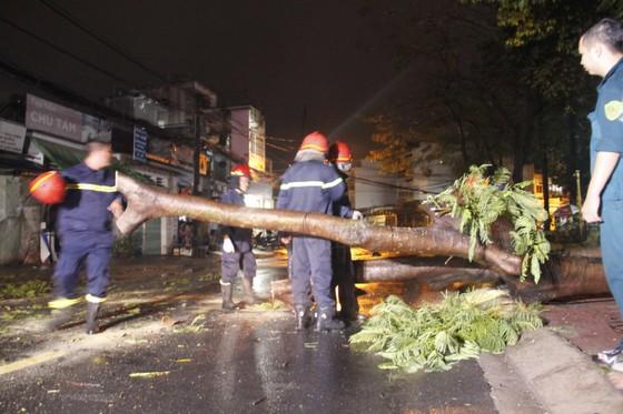 Cơn mưa lớn kèm gió mạnh làm bật gốc cây cổ thụ cao gần 20m ảnh 2