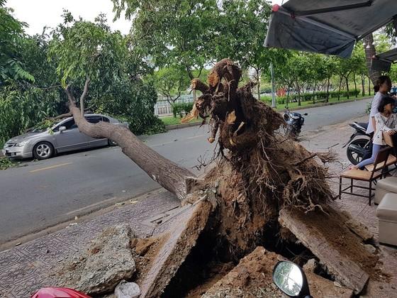 Gió lớn, cây ngã, nhà tốc mái, nhiều người bị thương ảnh 10