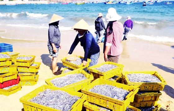 Ngư dân Bình Định trúng lớn ảnh 1