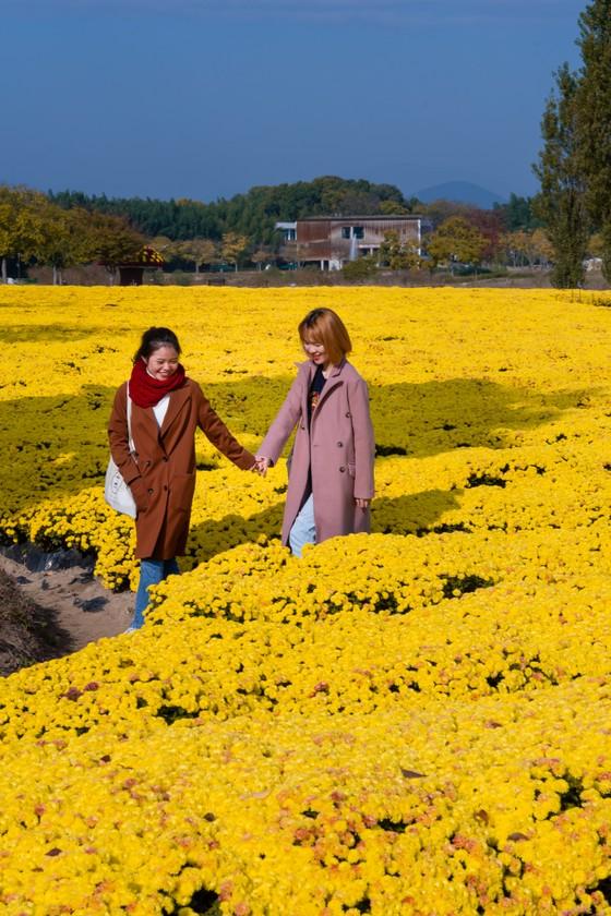 Hàng không tăng chuyến, khách Việt Nam có cơ hội du lịch Hàn Quốc giá rẻ ảnh 9