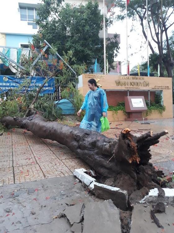 Cây xanh tét nhánh đè chết người ở quận 10 trong cơn mưa ảnh 4