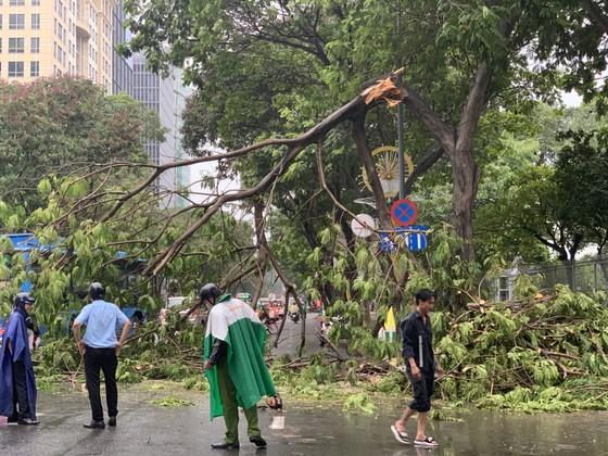 Cây xanh tét nhánh đè chết người ở quận 10 trong cơn mưa ảnh 2