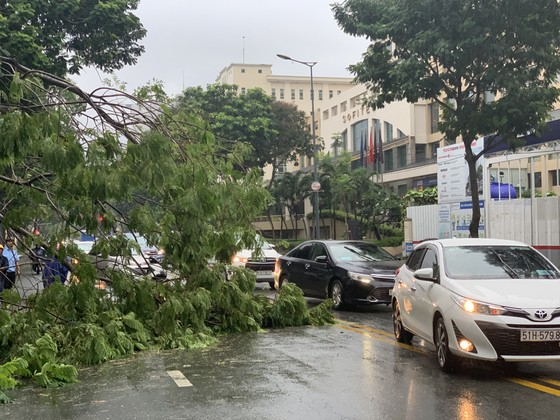 Cây xanh tét nhánh đè chết người ở quận 10 trong cơn mưa ảnh 3