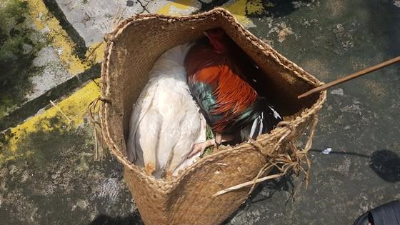 Phá trường gà ở quận Bình Tân, tạm giữ 39 đối tượng ảnh 1