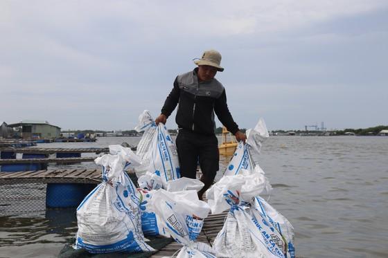 Cá lồng bè của 30 hộ nuôi chết hàng loạt, thiệt hại hơn 10 tỷ đồng ảnh 7