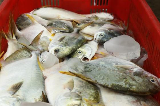 Cá lồng bè của 30 hộ nuôi chết hàng loạt, thiệt hại hơn 10 tỷ đồng ảnh 1