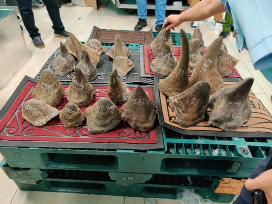 Thông tin mới nhất vụ gần 100kg nghi sừng tê giác tại kho hàng khu vực sân bay Tân Sơn Nhất ảnh 3