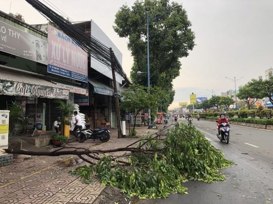 TPHCM mưa lớn, nhiều cây xanh bật gốc ảnh 1
