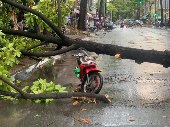 TPHCM mưa lớn, nhiều cây xanh bật gốc ảnh 4
