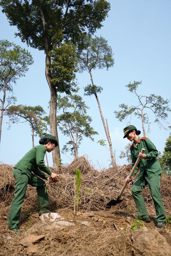 """Phủ xanh 2.000 cây Thông Mã Vĩ trên đồi cây """"Dâng Bác – Ơn Thầy"""" ảnh 13"""