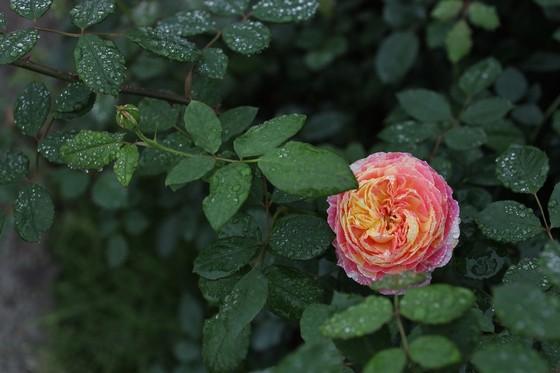 Dịp Tết thưởng thức 'Bản giao hưởng mùa xuân' lung linh tại Ecopark ảnh 12