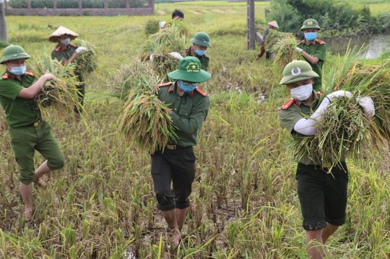 Công an xuống đồng thu hoạch lúa giúp dân đang cách ly y tế ảnh 3