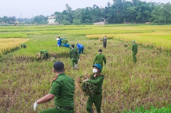 Công an xuống đồng thu hoạch lúa giúp dân đang cách ly y tế ảnh 6