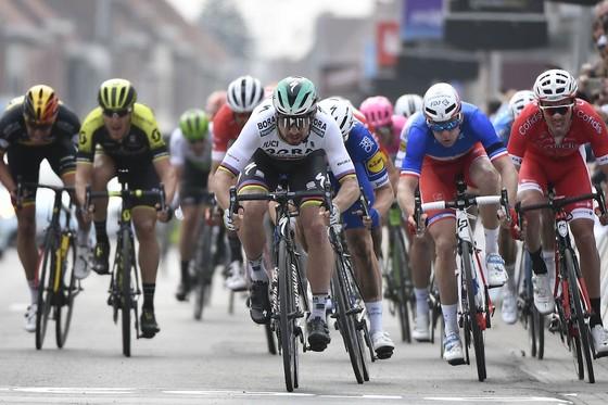 Xe đạp: Quá nhanh, quá nguy hiểm, Sagan đăng quang Gent-Wevelgem ảnh 2