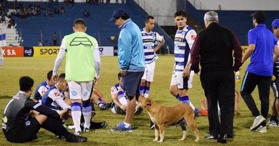 BÊN LỀ: Chó đi lạc được bổ nhiệm làm… trợ lý HLV ở Paraguay ảnh 1