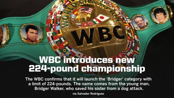 """WBC thiết lập hạng cân mới mang tên """"Bridger"""": Lấy cảm hứng từ cậu bé 6 tuổi cứu em khỏi chó dữ ảnh 1"""