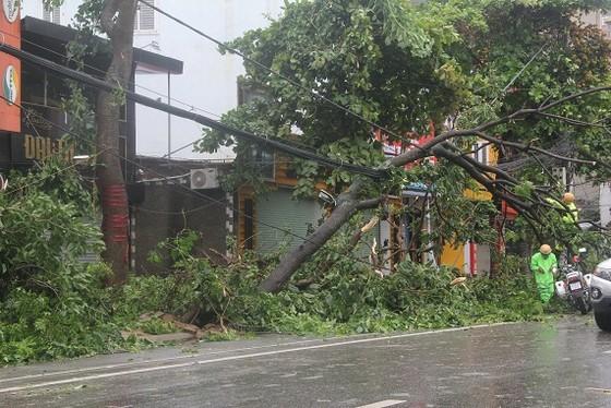 Hà Tĩnh: Bão số 2 đổ bộ khiến hàng loạt cây xanh, cột điện, biển hiệu... bị gãy đổ ảnh 28