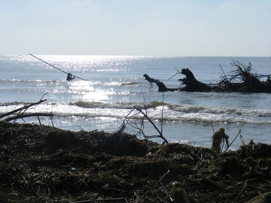 Kinh hoàng củi, rác ngập bãi biển Sầm Sơn tỉnh Thanh Hóa ảnh 6