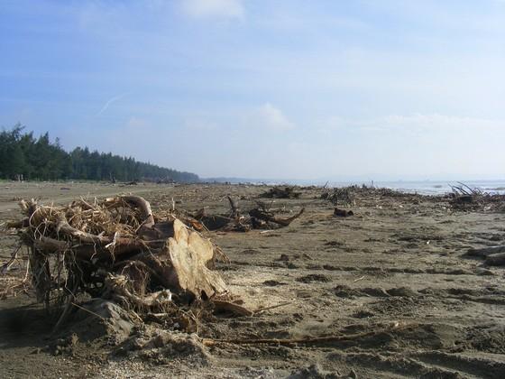 Kinh hoàng củi, rác ngập bãi biển Sầm Sơn tỉnh Thanh Hóa ảnh 8