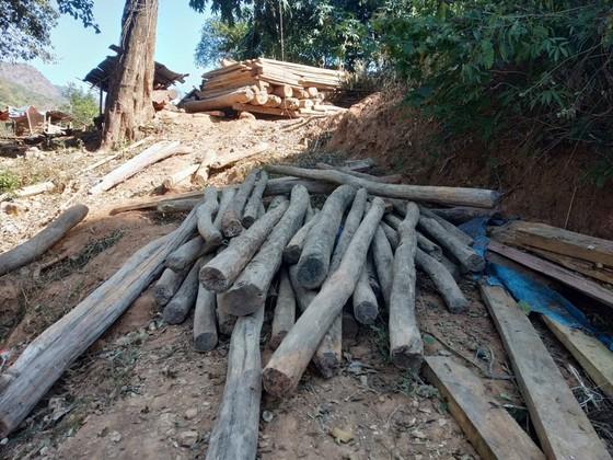 Nghệ An tiến hành xử lý gần 400m³ gỗ quý người dân vớt sau mưa lũ ảnh 1