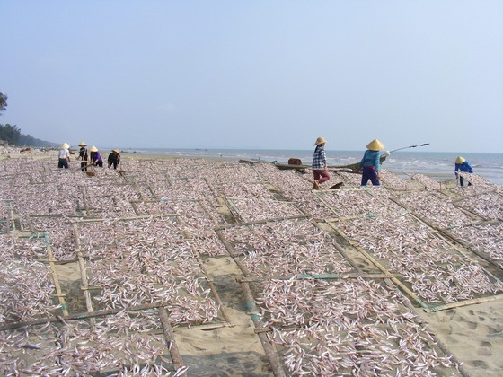 Đầu năm, ngư dân trúng mùa cá cơm ảnh 1