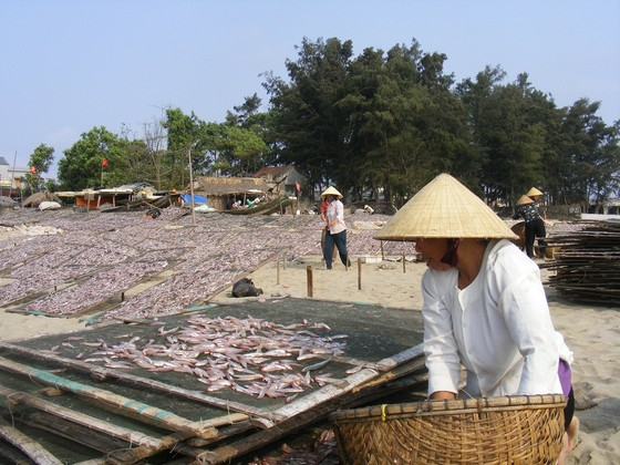Đầu năm, ngư dân trúng mùa cá cơm ảnh 2