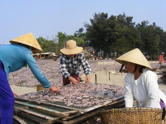 Đầu năm, ngư dân trúng mùa cá cơm ảnh 4
