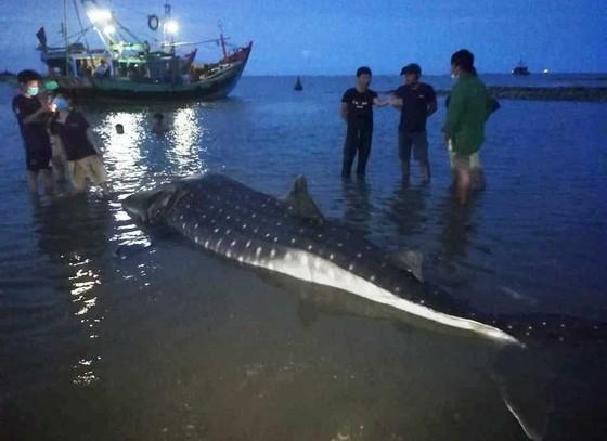 Nghệ An: Phát hiện xác cá lạ trôi dạt vào bờ biển ảnh 1