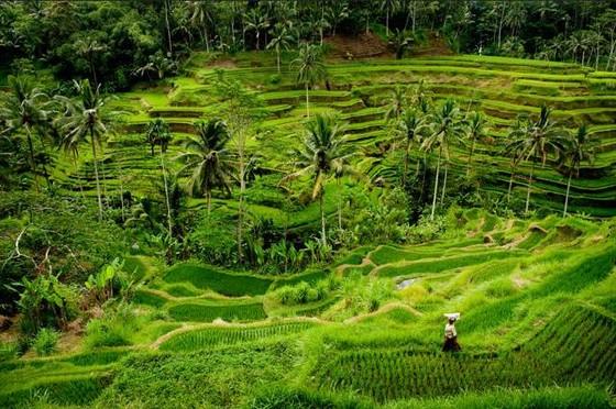 巴厘島──熱帶風情天堂(下) ảnh 1