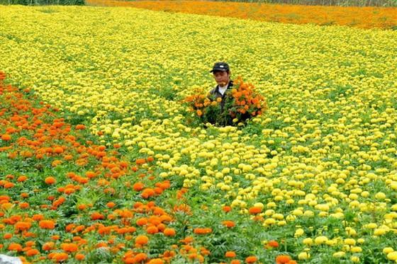 沙瀝市發展具花卉本色旅遊業 ảnh 1