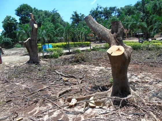 維護校園樹木 ảnh 1