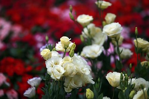 Chiều 29 Tết, người dân TP Hồ Chí Minh đổ xô đi mua hoa ảnh 11
