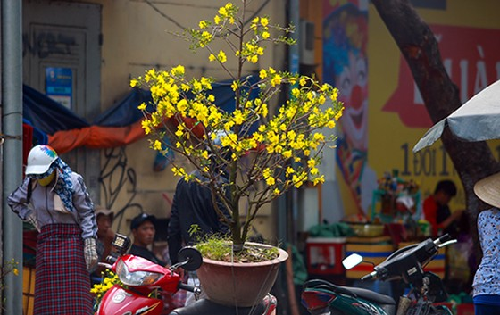 Chiều 29 Tết, người dân TP Hồ Chí Minh đổ xô đi mua hoa ảnh 9
