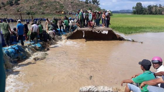 Vỡ đê, hàng trăm người dân trầm mình cứu lúa ảnh 5
